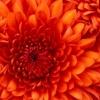site de rencontres | voir le profil de darius2b